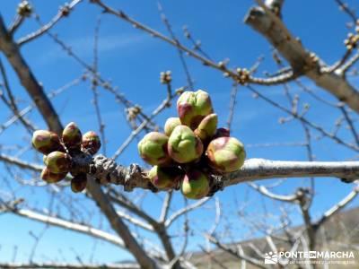 Cerezos en flor en el Valle del Jerte - Floración Cerezo;vialibre senderismo puente senderismo